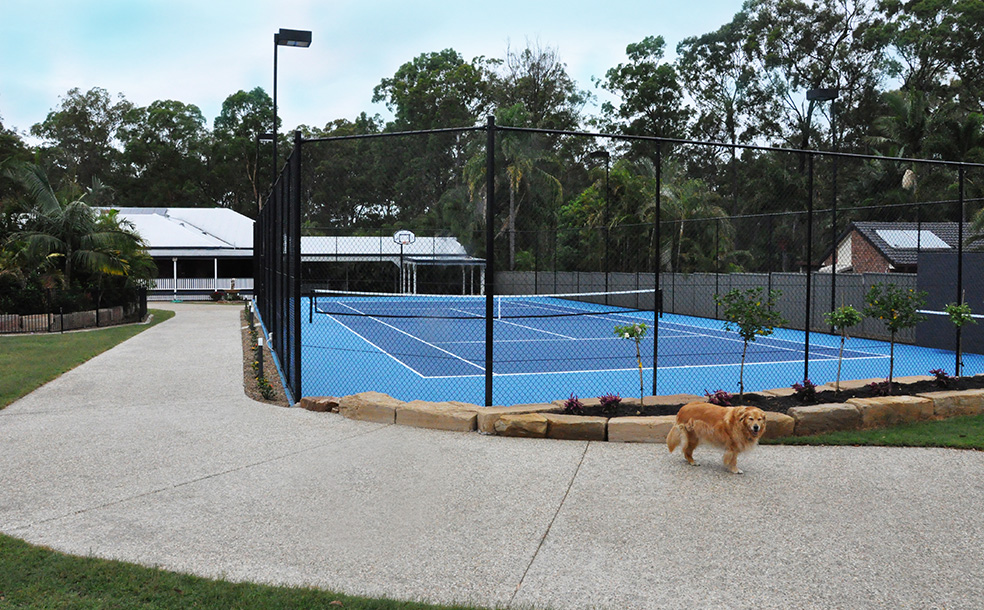 blue tennis court with dog